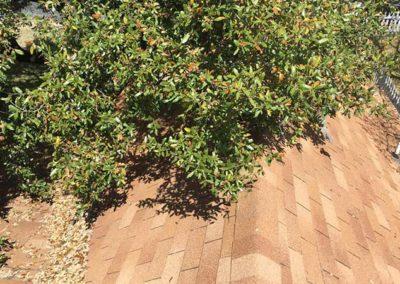 roof-tree